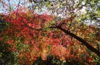 愛岐トンネル郡へ紅葉を見に行った話