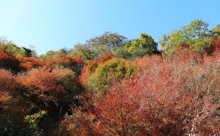 愛岐トンネル郡 紅葉