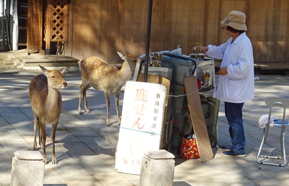 奈良公園ツーリング