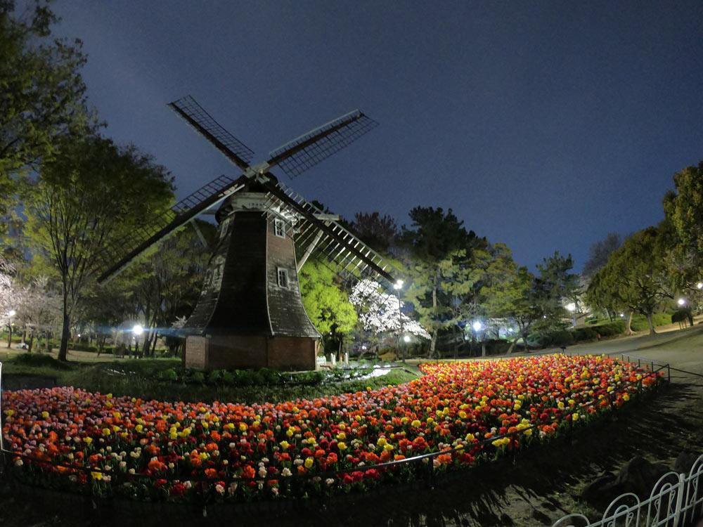名城公園夜桜