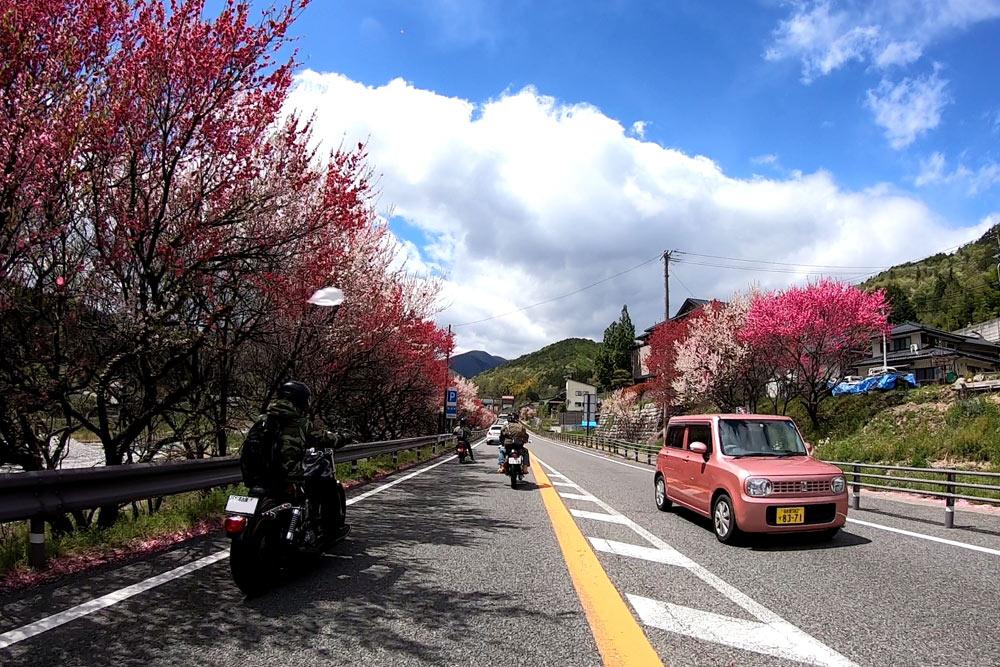 花桃ツーリング
